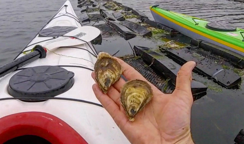Oyster Lover's Kayak Experience