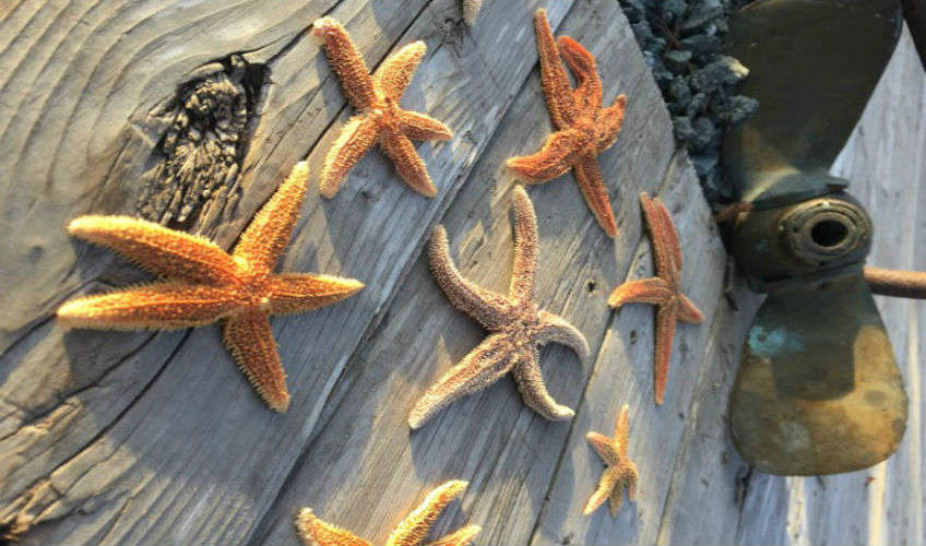 Wild Starfish & Pearl Hunt