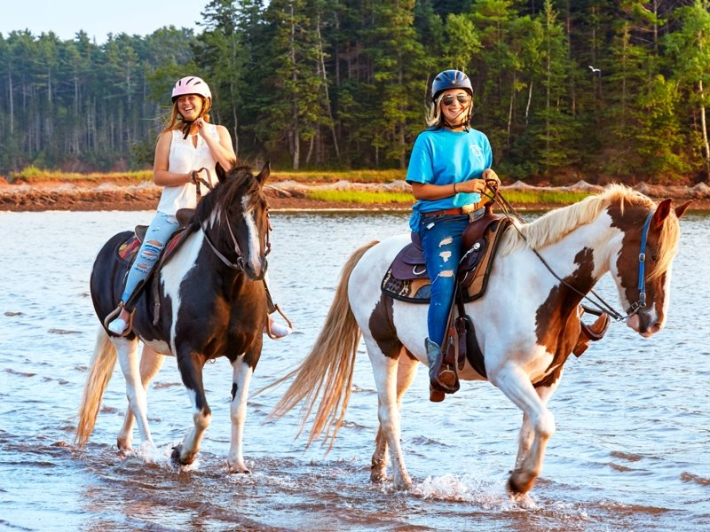 Brudenell Trail Rides, two horses